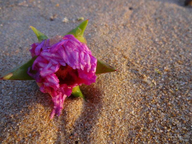 Fleur sur le sable